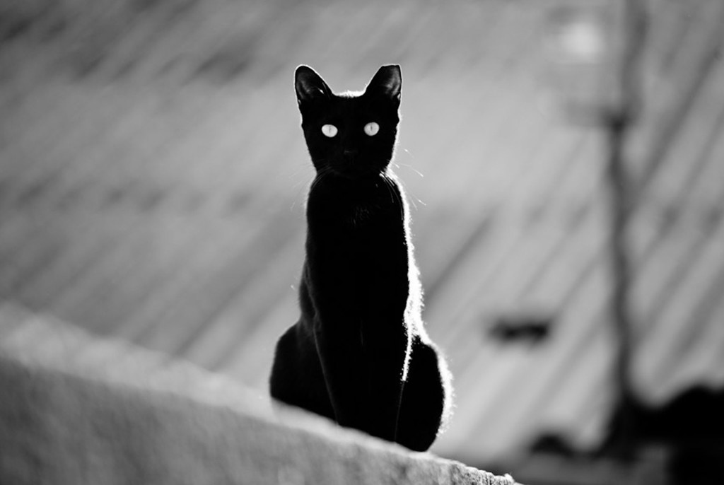 story-cat-guardian